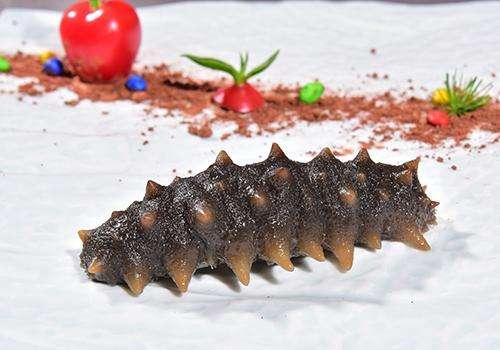海參種類原材料價格不斷上漲
